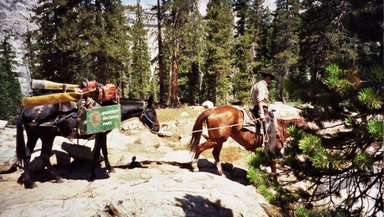 Trail maintenance in Yosemite, on Pacific Crest Trail